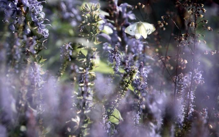 Fröhlicher Trubel auf der Sommerwiese wurde vom Schmetterlingstanz eingeleitet.