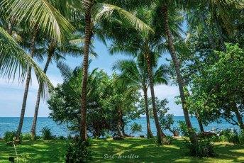 our garden of paradise