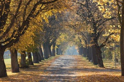 trees-1030853_960_720