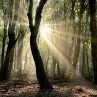 Follow the Light.