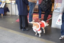 that dog sah cute