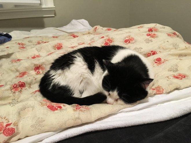 lulu missing cat 2