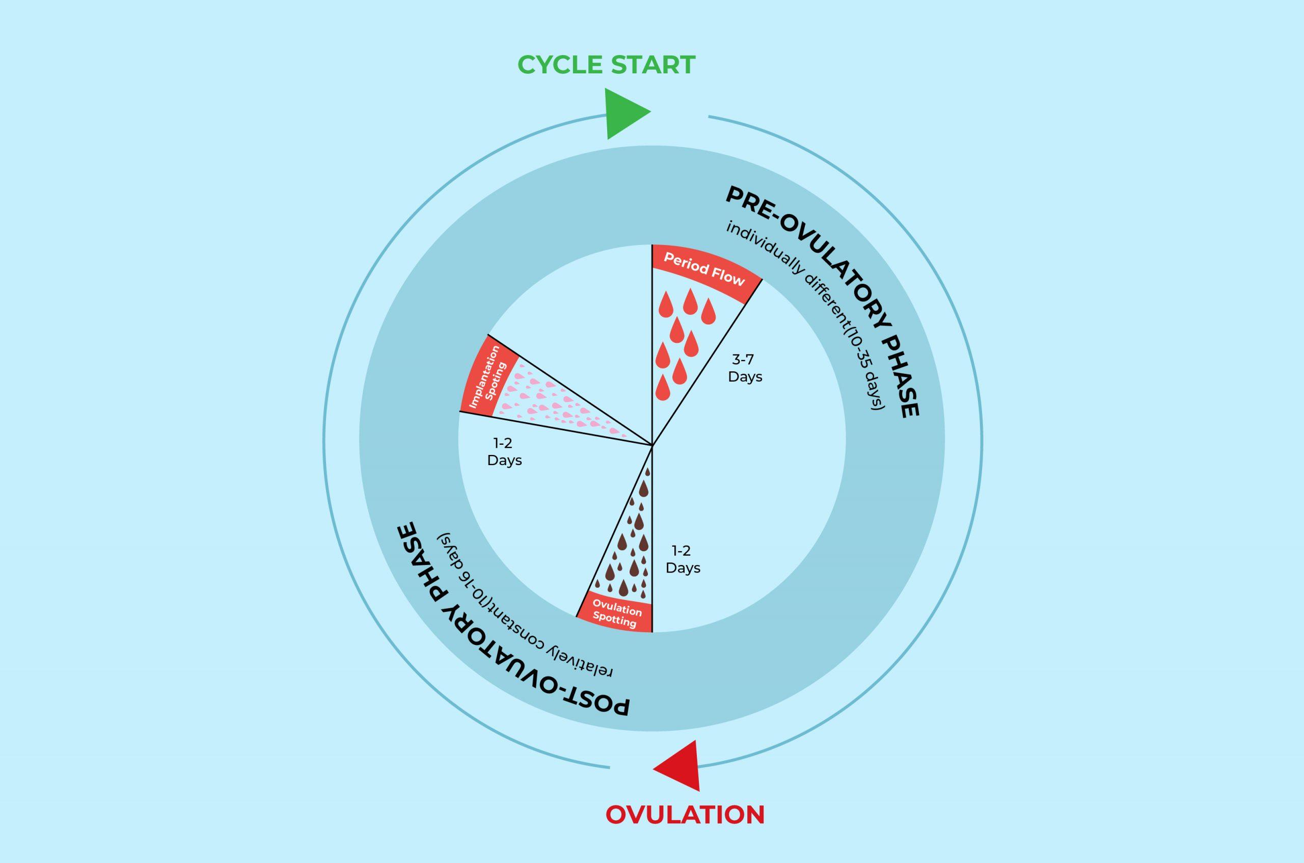 Ovulation spotting VS implantation bleeding VS regular period-01