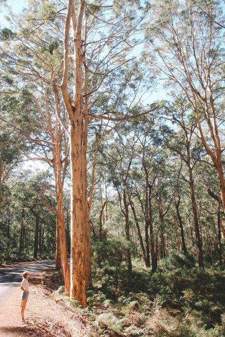 Westaustralien und seine Wälder bei Kalbarri