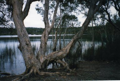 Brown Lake, Stradbroke Island, Queensland, Australia - taken by Sue Ellam, London, UK