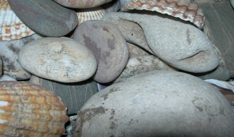 Pebbles and shells taken by Sue Ellam