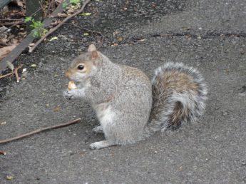 Squirrel enjoying a snack, Greenwich Park, London. Taken by Ervin Corzo, UK.