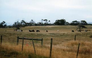 A pastural scene in Wonthaggi, Victoria, Australia taken by Sue Ellam, London, UK