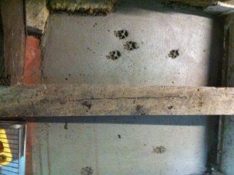 Doggy paw prints