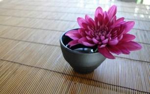 chrysanthemum-757439_960_720