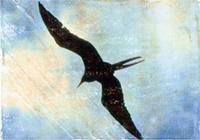 Bird in Flight from SoulGuidedCoach.com