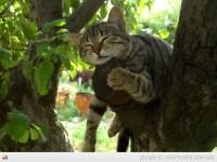 feline | Soul Healer Animals - cute pictures, photos, videos