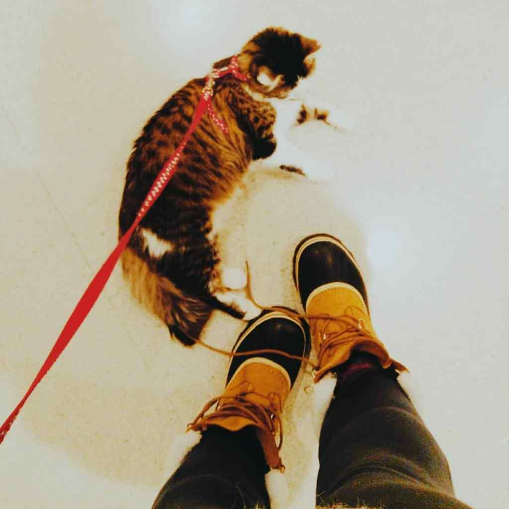 Partir au Canada avec son chat