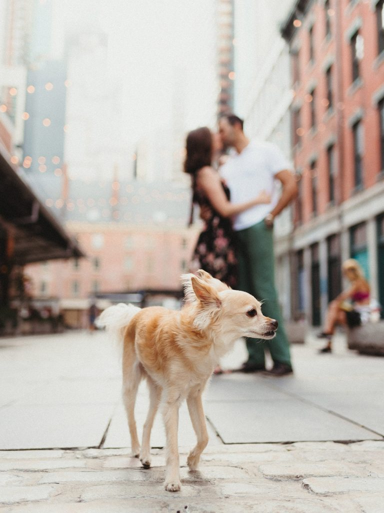 Pets on the engagement session