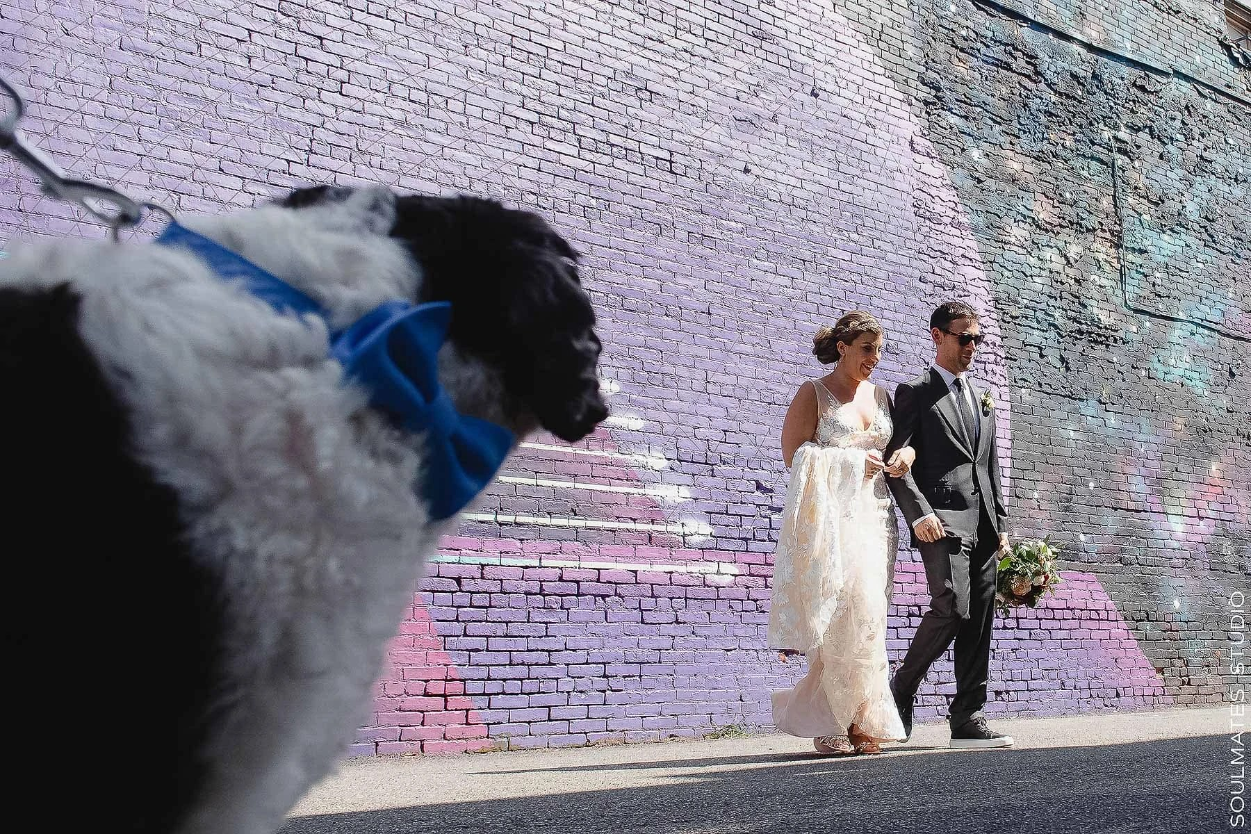 Dog looking at Bride and Groom