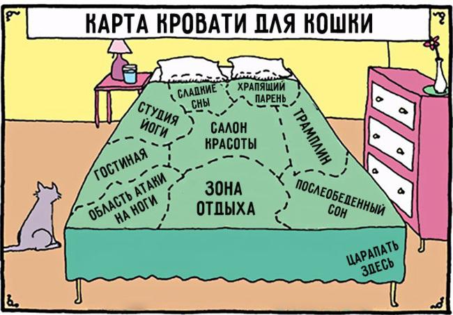комиксы-про-отношения-кошек-и-людей-7