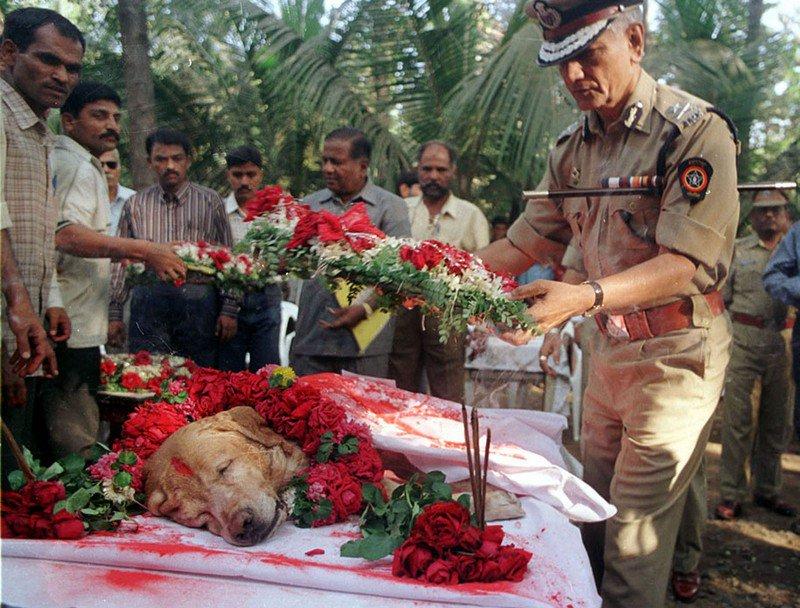 Этот пес спас тысячи жизней во время серии взрывов в Мумбаи в марте 1993 г. Он нашел более 3 тонн взрывчатки, 600 детонаторов, 249 ручных гранат и 6 тысяч единиц оружия. Его похоронили со всеми почестями в 2000 г.