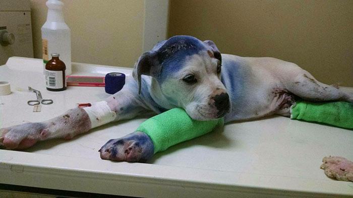 rescue-dog-comforts-pup-surgery-sammie-simon-9