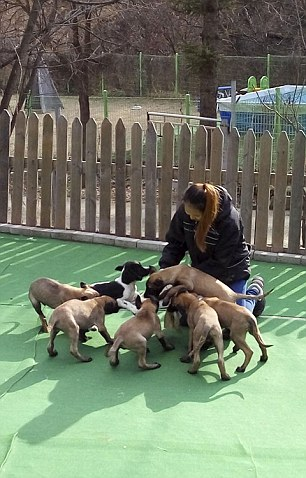 Korean cloned dogs arrive in Yakutia