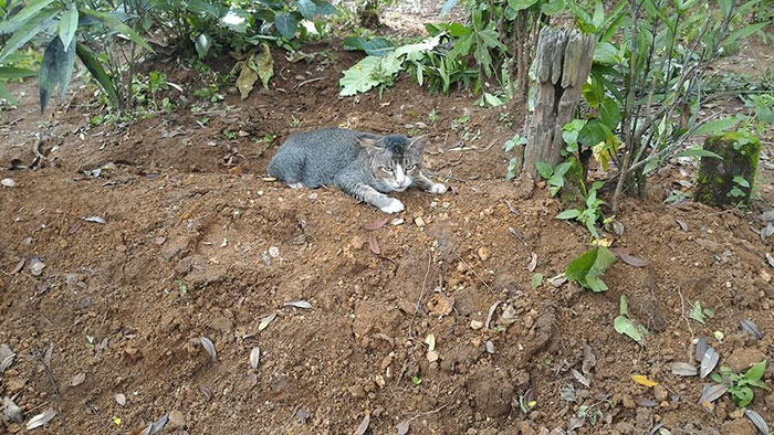 grieving-cat-spends-year-owner-grave-4