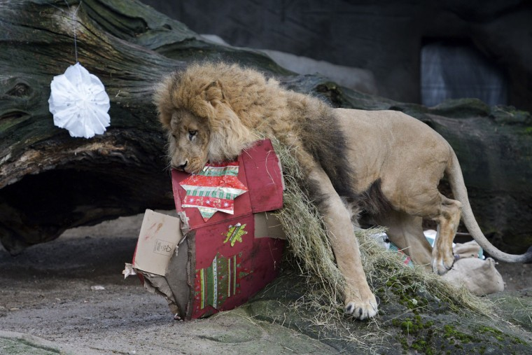 apphoto_germany-christmas-zoo-1-760x507