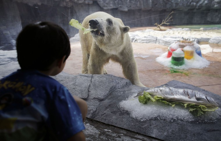 apphoto_singapore-zoo-polar-bear-760x486