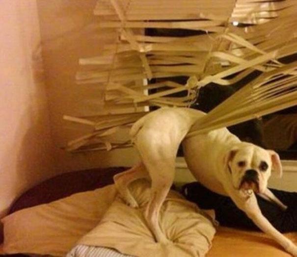 dog-fails-82-584e7f951f9cf__605