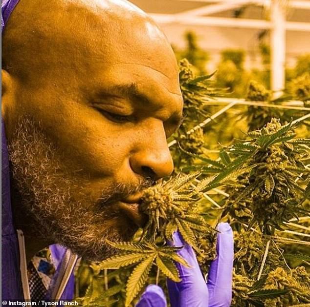 Майк Тайсон каждый месяц выкуривает травы на $40 тыс.