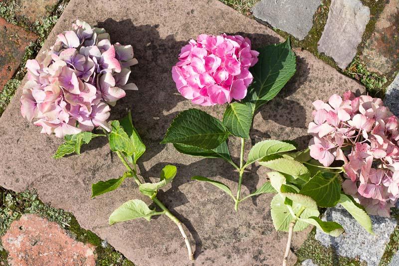 Trend Natural Living: ein Korb als Vase