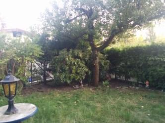 Decolony: Garden Project