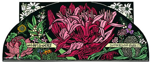 Sutherland Shire Wildflowers