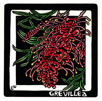 Grevillea sp. hybrid - Linocut