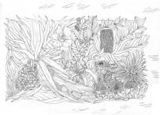 Seaside Wildflowers Drawing 5