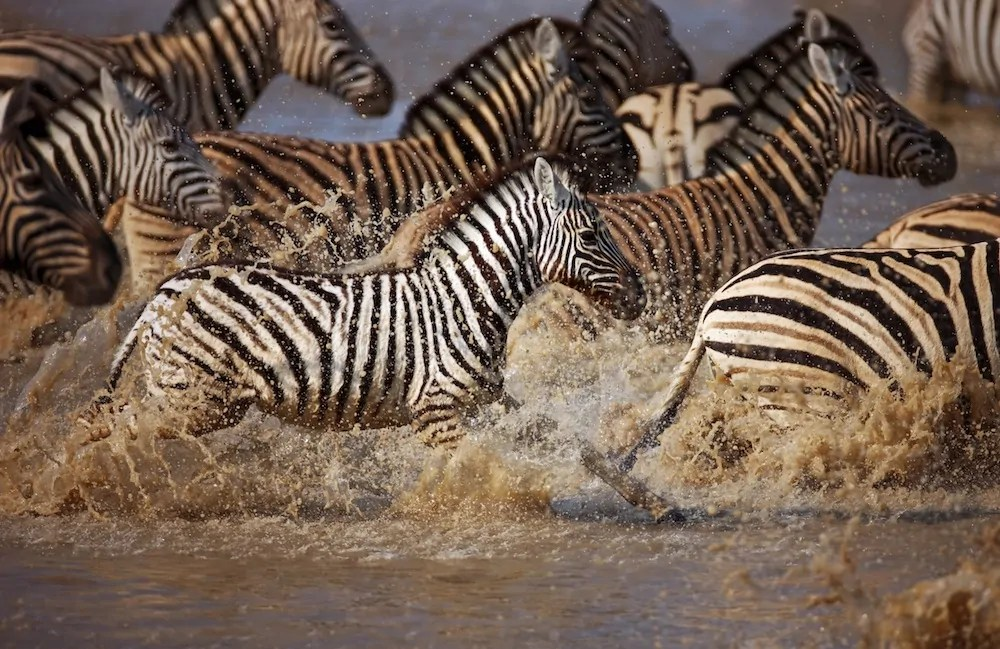 best wildlife tours that are responsible too