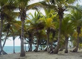 My beach in Grand Cayman