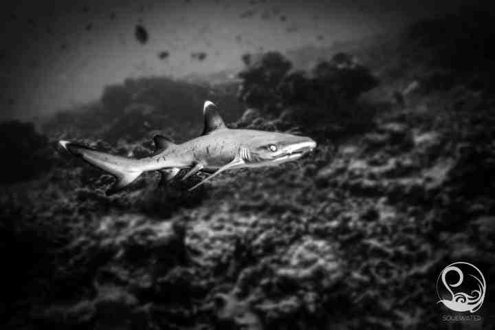 underwater gallery