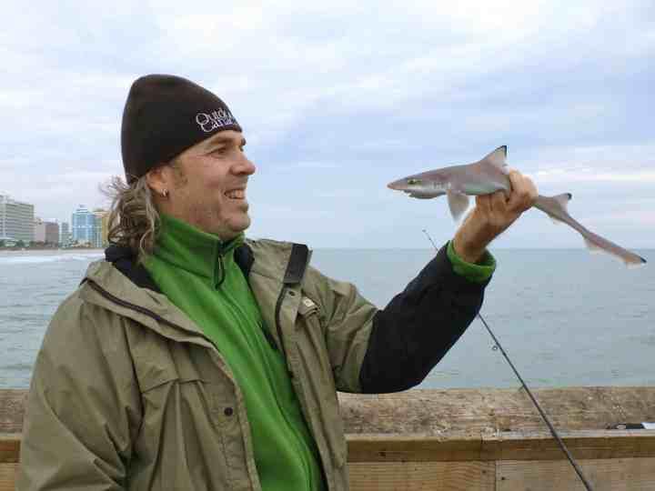 Fisherman catching juvenile blacktip shark