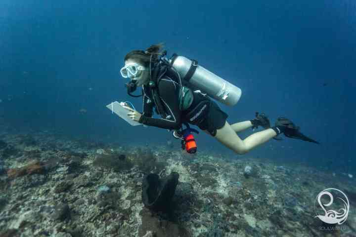 Diver with slate making a reef fish survey in Nusa Penida, Bali, Indonesia