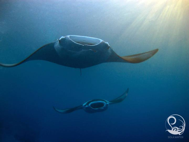 online learning, online course, training, manta rays flying through sunbeams