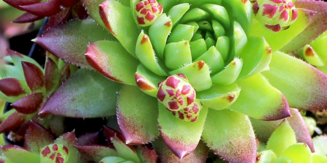 Seriously? I can order succulents online? » SoulyRested