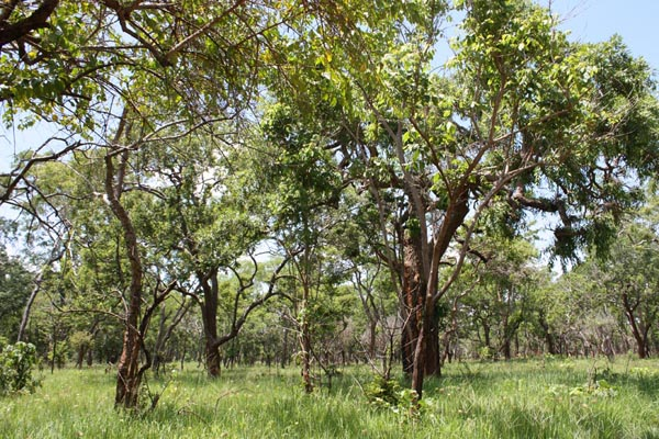 Tanzanian FSC certified coastal forest
