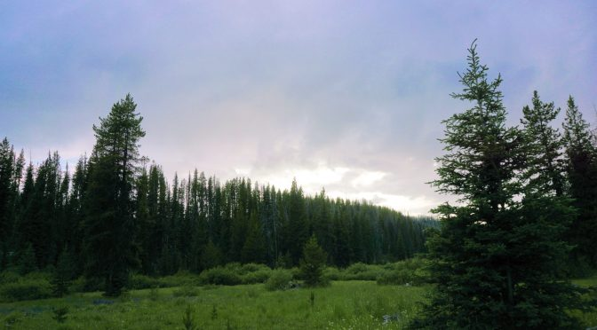Long Swamp Dusk, 2019-07-16