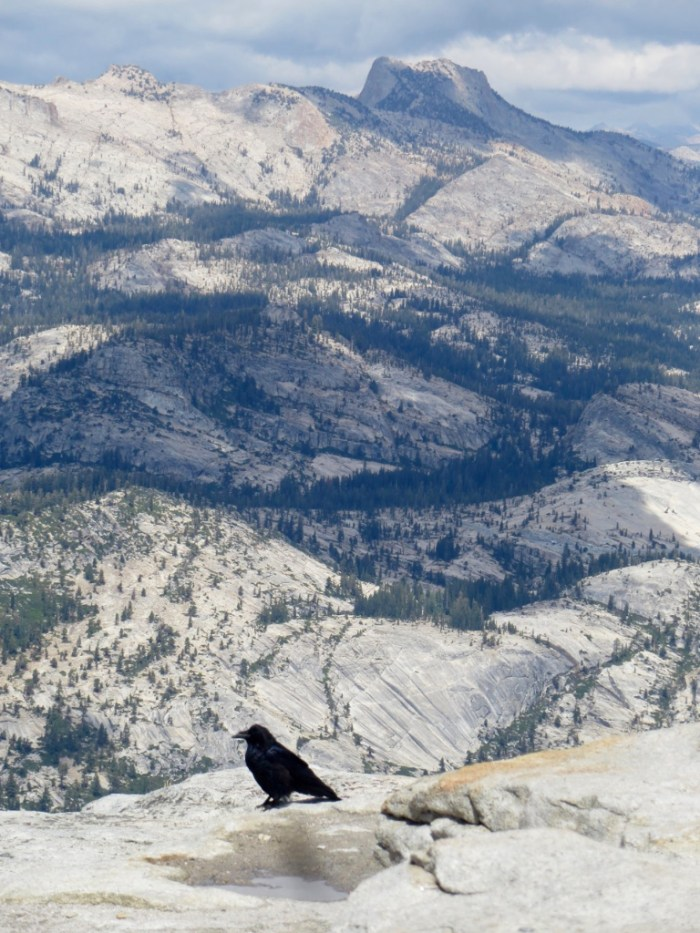 Crow on edge of cliff with Yosemite mountains in background