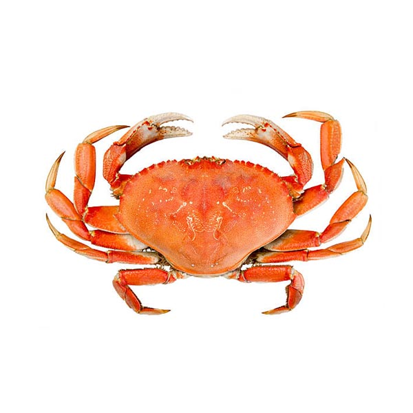 crab dungeness of Sound Leader Seafoods