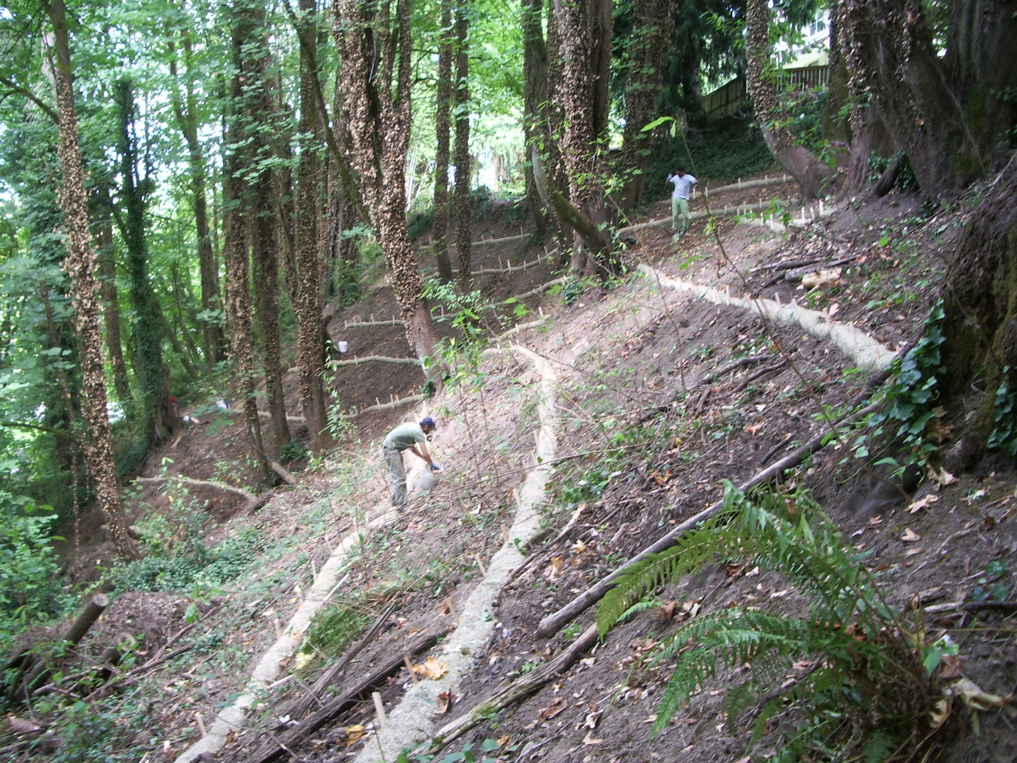 Slope Stabilization Stakes Live