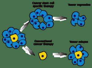 cancer stem