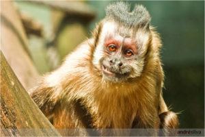 maimuta zambet
