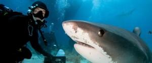 selfie rechin