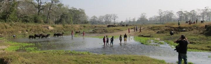 The Tharu Stick Dancers of Sauraha