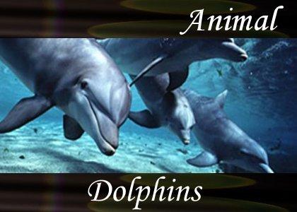 SoundScenes - Atmo-Animal - Dolphins